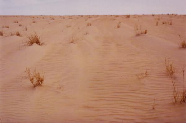 Dünen mit leichtem Bewuchs